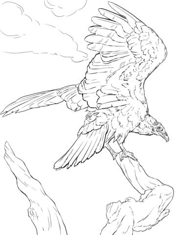 Aura Gallipavo Realista Dibujo para colorear | pájaros y aves ...