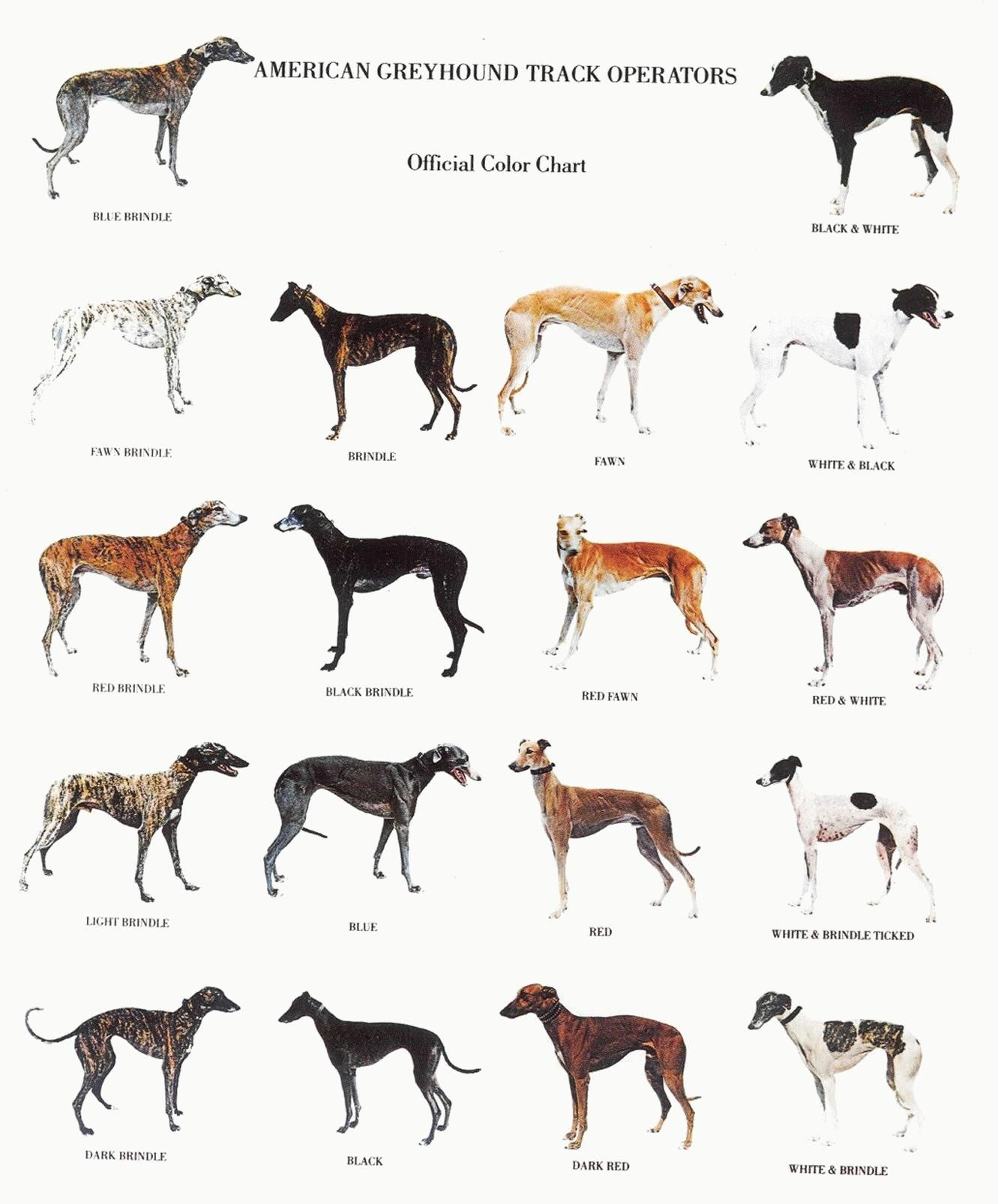 Famous Greyhound Owners Have Included