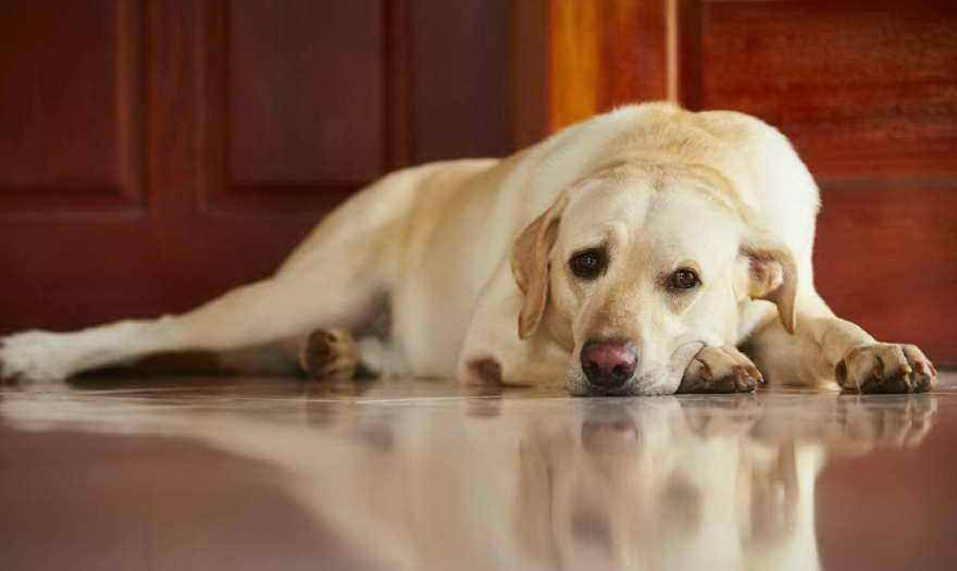 Causes Of Vomiting And Diarrhea In Dogs