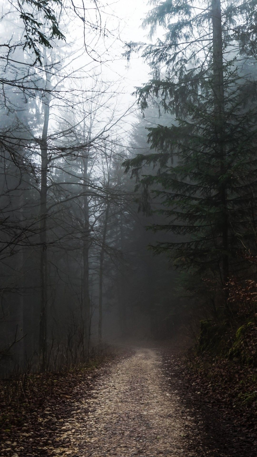 Foggy Forest Path Autumn Gloomy Weather Foggy Forest Adventure Aesthetic Nature Photography