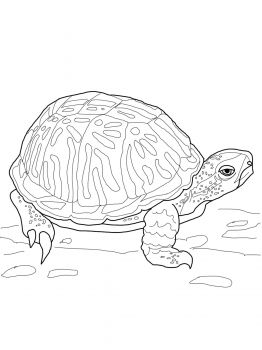 Ornate Box Turtle Turtle Coloring Pages Turtle Drawing Frog