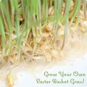 Grow easter grass from lentils etc easter pinterest wheat grow easter grass from lentils etc negle Images