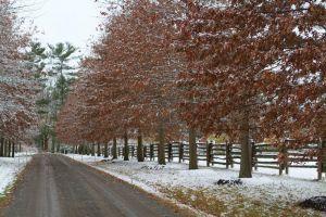 Martha Stewart's Katonah, New York property in winter