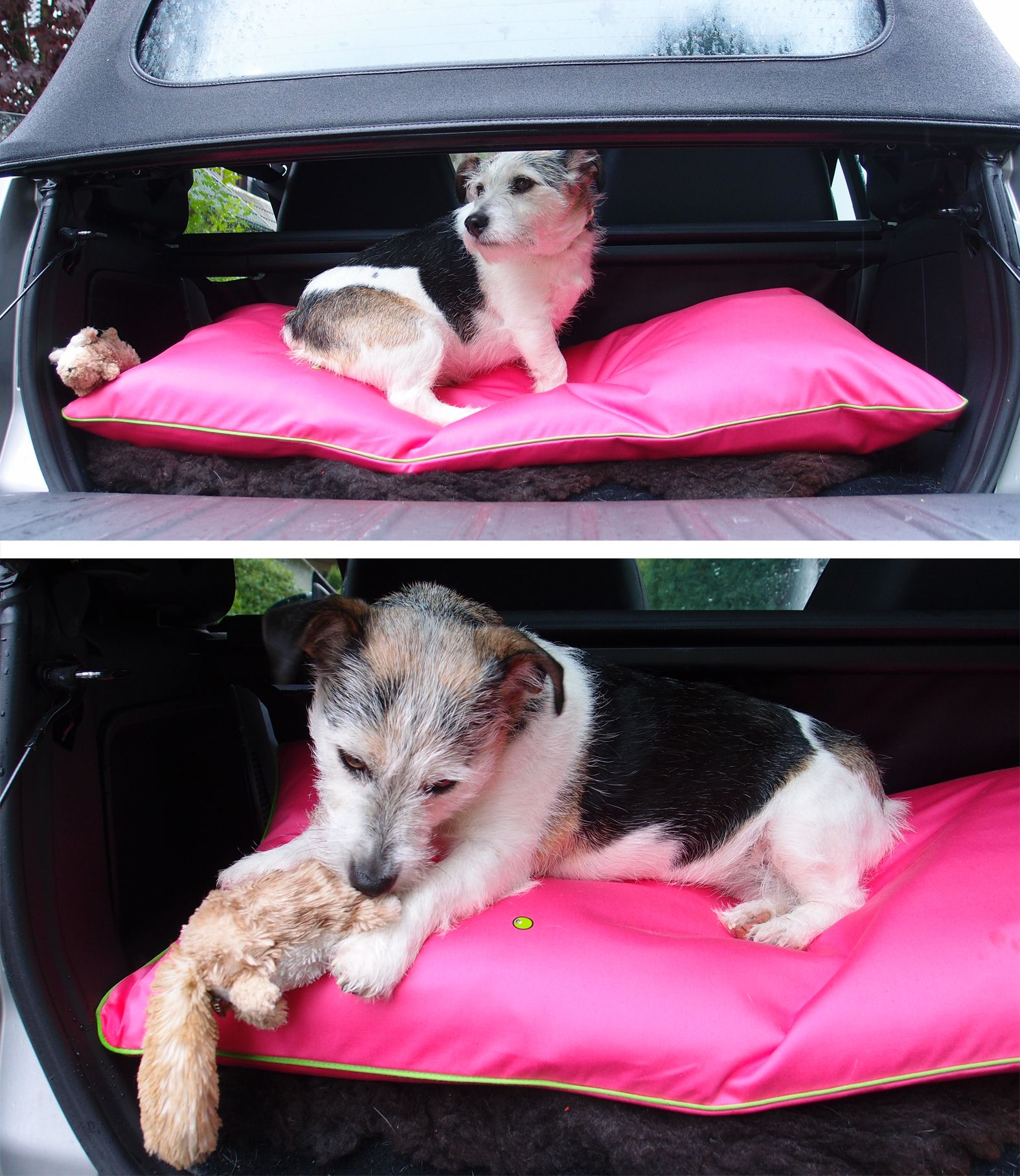 This is how our dog bed for the smart fortwo car looks inside the ...