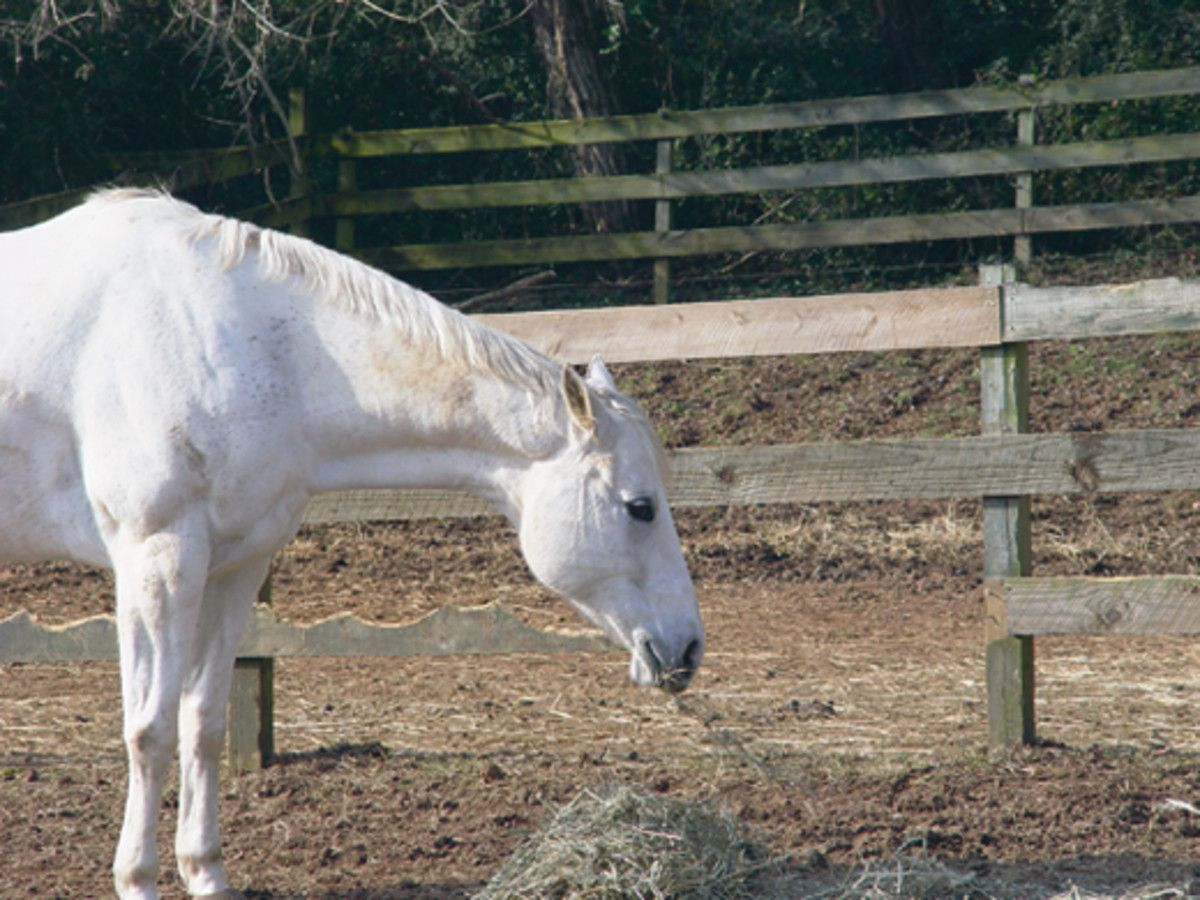 Managing Heat Cycles In Mares This Article Teaches Owners The