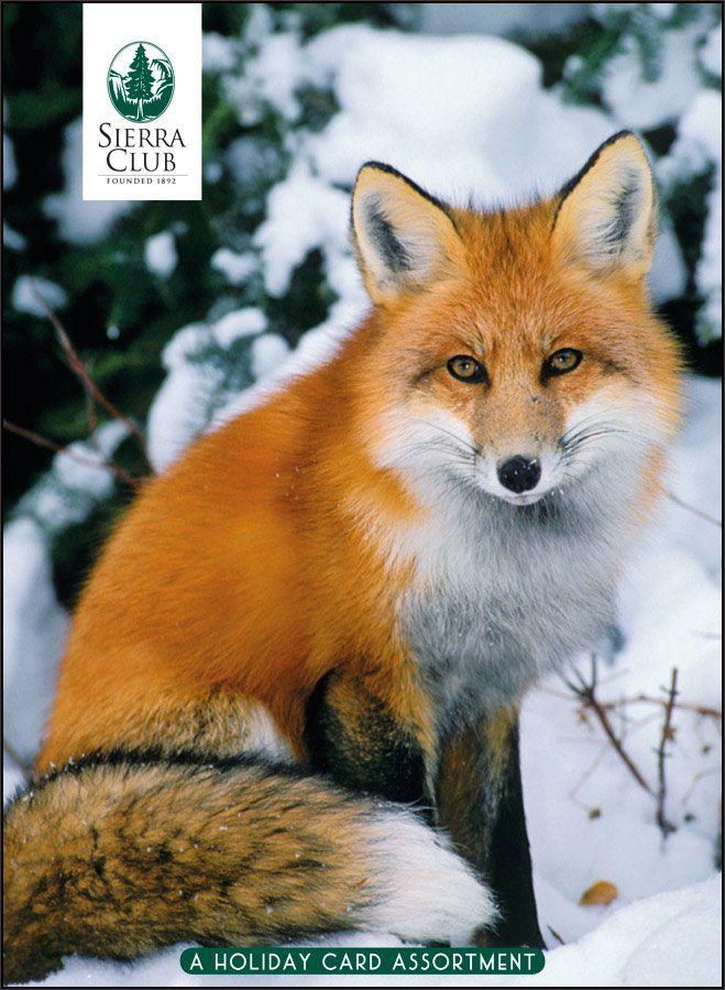 Winter Wildlife: Art Wolfe, Tom & Pat Leeson, Katherine Feng ...