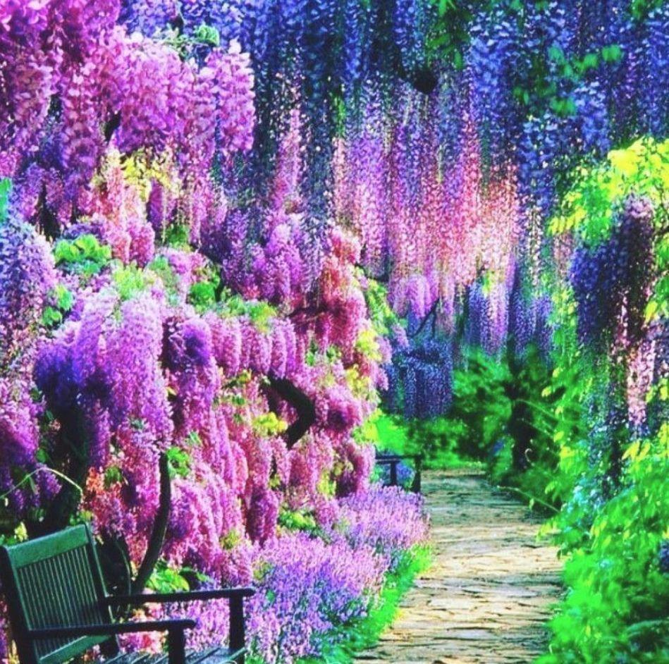 5d7c70681693df7b0882fe9090dac3d1 - Wisteria Tunnel At Kawachi Fuji Gardens Kitakyushu Japan