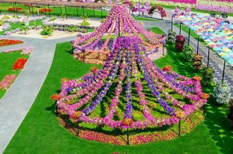 Dubai Miracle Garden And Global Village Shopping Tour Miracle Garden Beautiful Flowers Garden Most Beautiful Flowers
