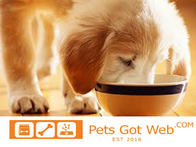 بيتس جوت ويب لشراء وبيع الحيوانت الأليفة تقدم لكم كيفية تغذية الكلاب Petsgotweb Pets Animals Dogs