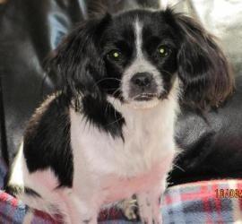 Winnie Is An Adoptable Shih Tzu Dog In Council Bluffs Ia Winnie