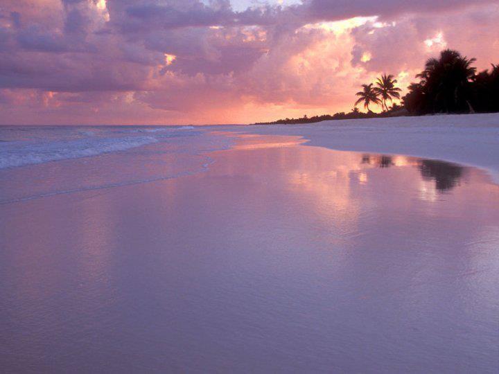 Beautiful White Sand Beach Cancun Beaches Beautiful Beaches Beach