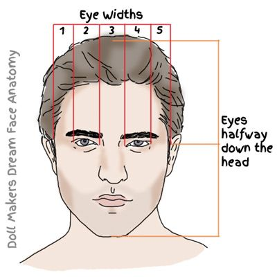 Male Face Anatomy Chart by Amanda Day of www ...