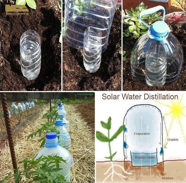 Reuse Bottles To Make A Drip Irrigation System Garden