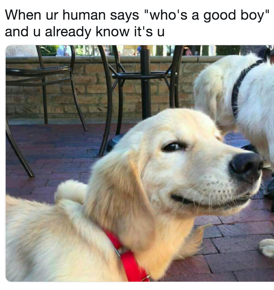 28 Funniest Dog Memes Best Viral Dog Jokes And Pictures Cutefunnydogs Cute Dog Memes Dog Jokes Funny Animals