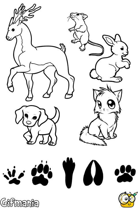 Emparejar Animales y Huellas | Dibujos para Colorear | Pinterest ...