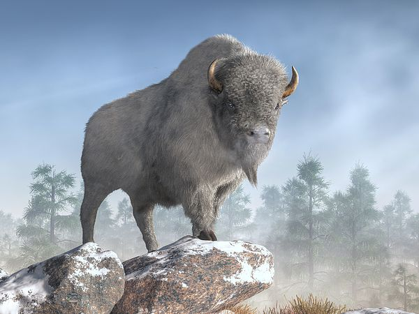 what does great white buffalo mean