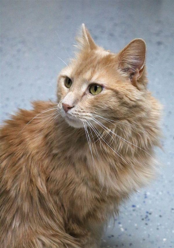 Leo | RSPCA Adopt a pet | RSPCA ❤️ | Pets, Leo, Cats