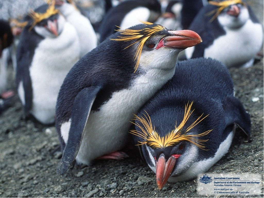Angry Animals Google Search: Antarctic Animals - Google Search