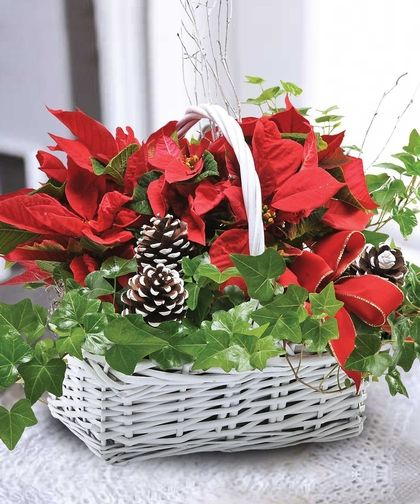 Poinsettia And Ivy Christmas Flowers Christmas Floral Arrangements Christmas Arrangements