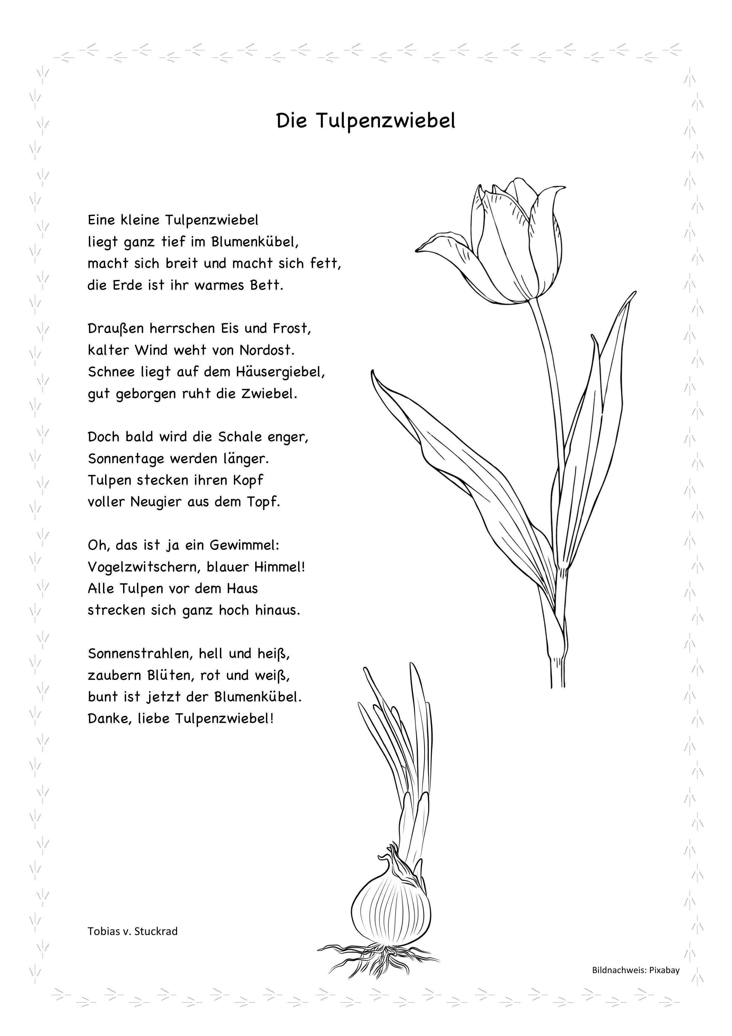 Die Tulpenzwiebel Mp3 Liedtext Mit Ausmalbild Unterrichtsmaterial In Den Fachern Fachubergreifendes Musik In 2021 Gedichte Fur Kinder Gedicht Grundschule Fruhlingsgedicht