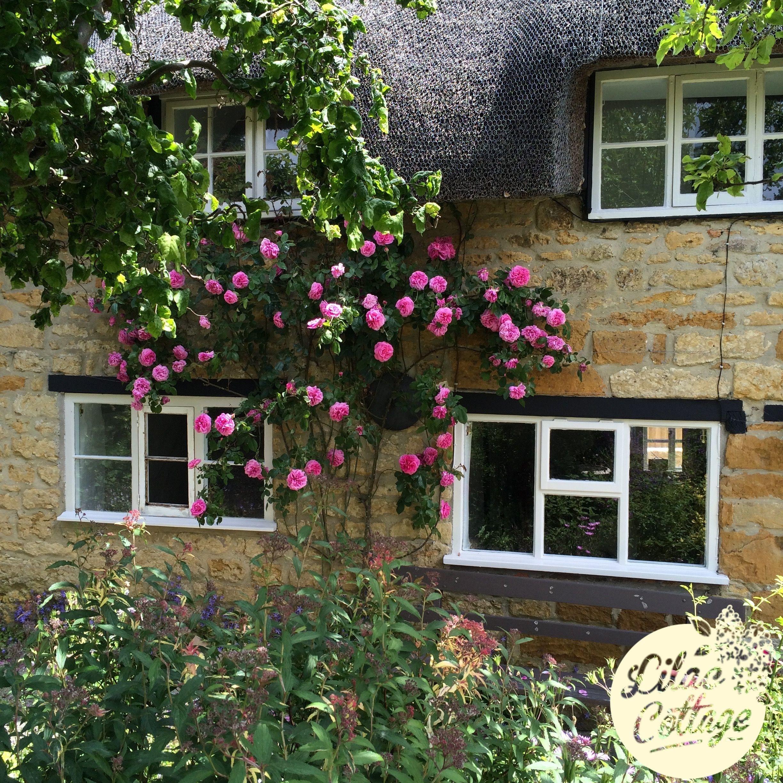 Lilac Cottage | Vintage Holidays in Somerset
