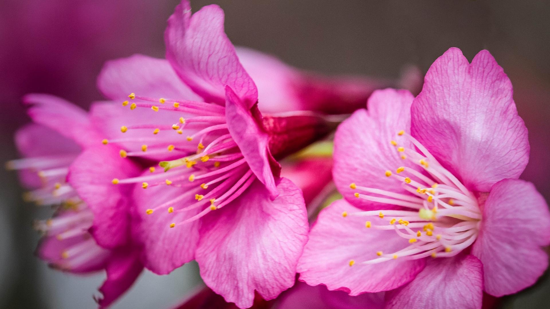 Какие на рижской самые дешевые цветы фото вк