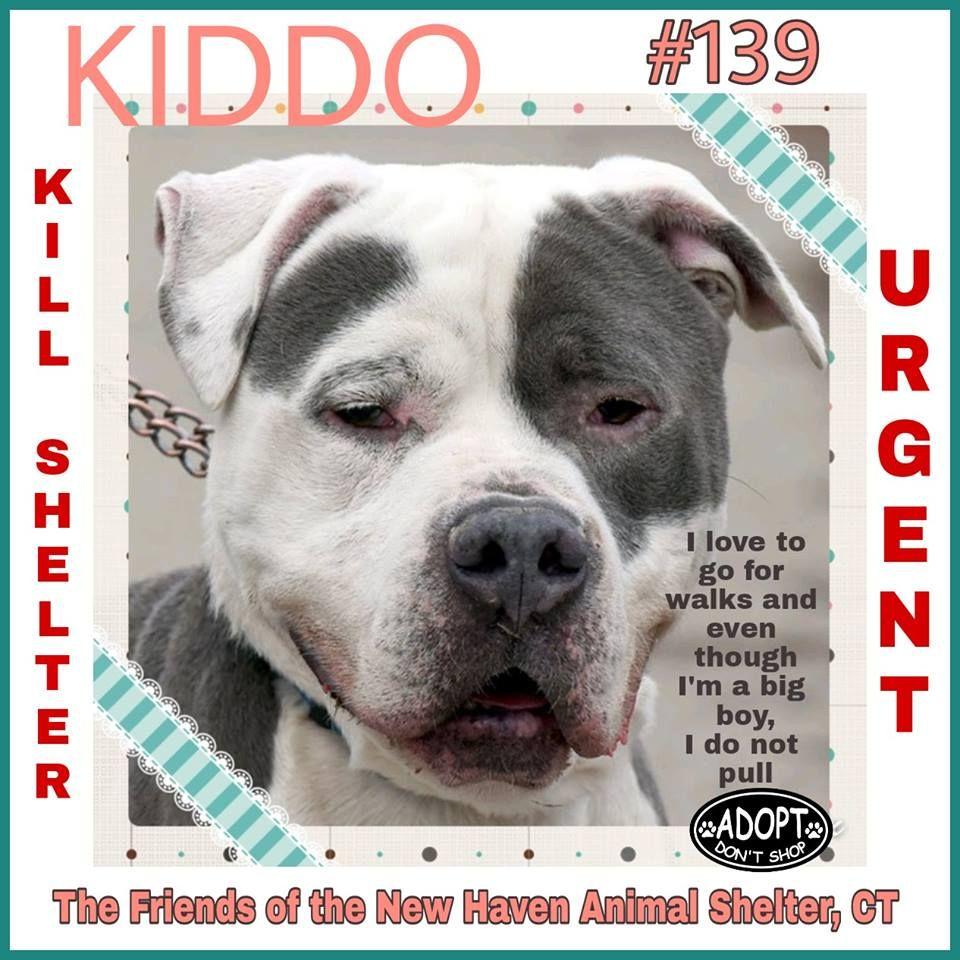 Adopt 139 Kiddo On Petfinder Animal Shelter Pitbull Terrier Kiddos