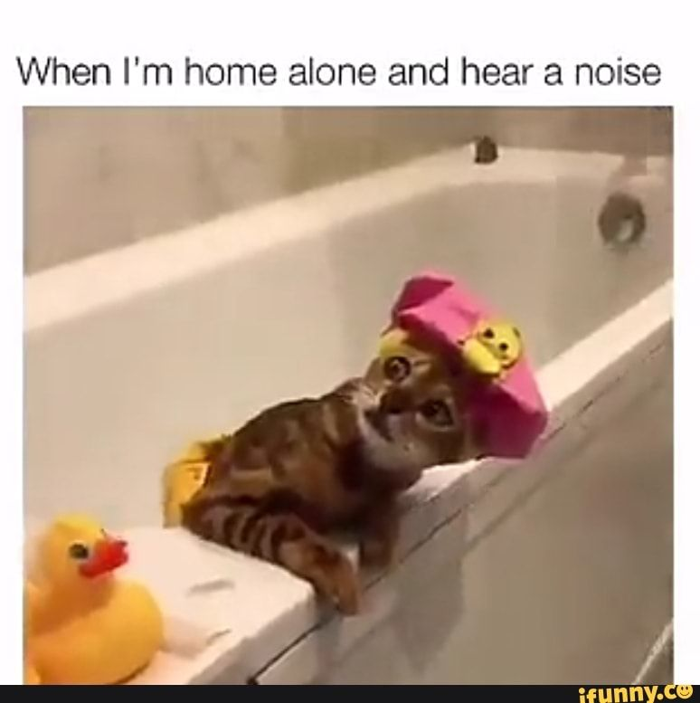 Whenever I M Home Alone Humor Funny Quotes Funny Pictures