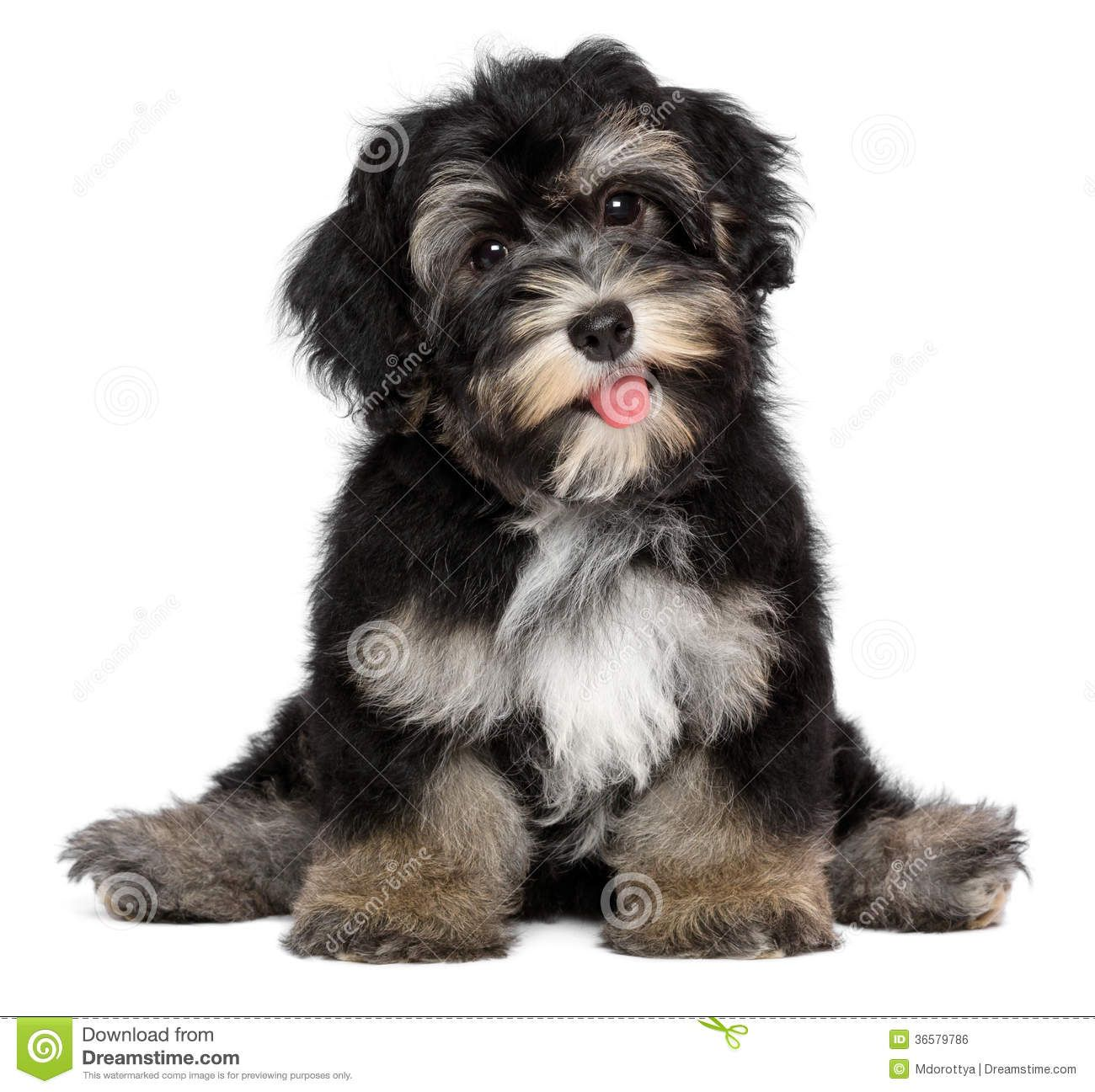 Pin by Kris Morris on Wesley Short dog, Tallest dog, Westies