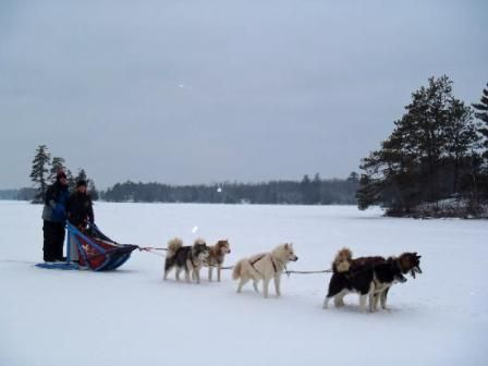 Chill out with a dog-sled tour!