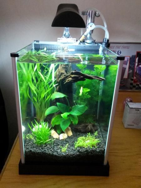 Fluval Spec 3 Aquascapes Aquarium Fish Tank