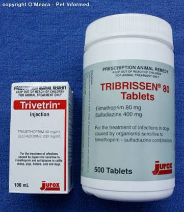 Coccidiosis In Dogs And Cats And Other Animals Cat Medication Dogs Dog Health