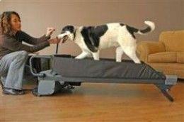 How To Teach Your Dog To Walk On A Dog Treadmill Dog Treadmill