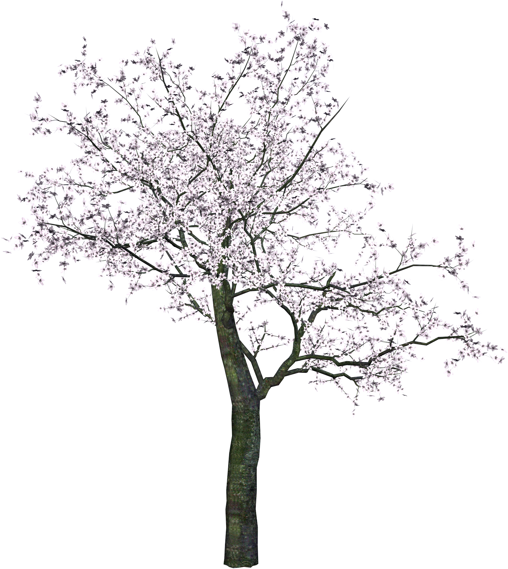 Tree Png3475 Png 1741 1949 Japanese Tree Cherry Blossom Drawing Picture Tree