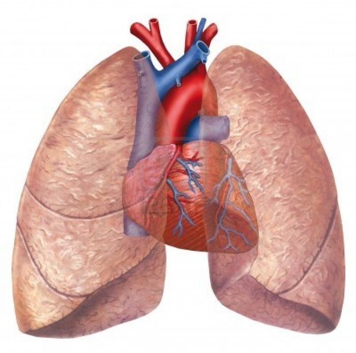 cause of chronic lung disease found - http://gazettereview, Cephalic Vein