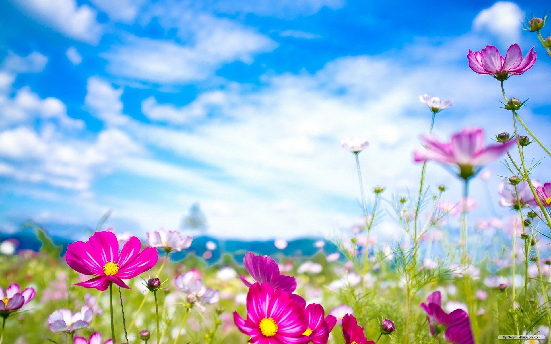 Download free Free Spring Desktop Wallpaper for your