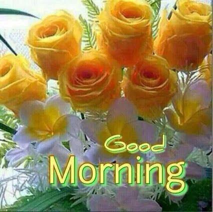 Majda Pal Google Good Morning Flowers Good Morning Images Good Morning Greetings