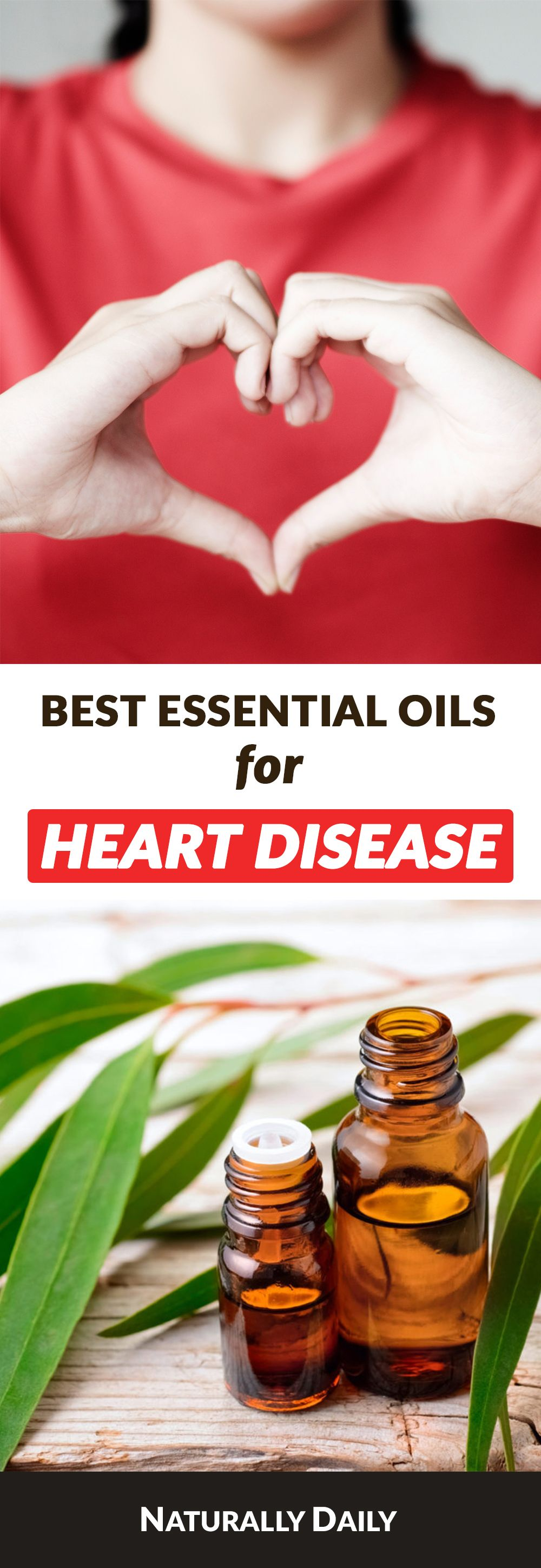 6 Essential Oils for Heart Disease  Heart Health Heart disease is one of the leading causes of death worldwide The sooner we start taking good care of the heart health th...