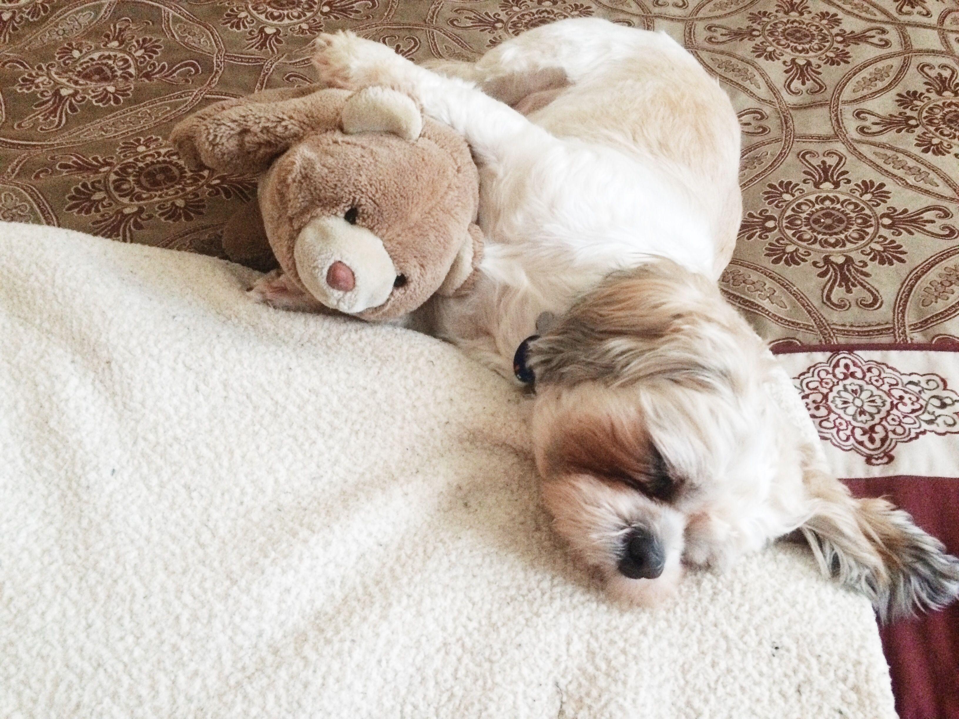 A sleepy puppy and his teddy bear! #sleeping #snowday # ...