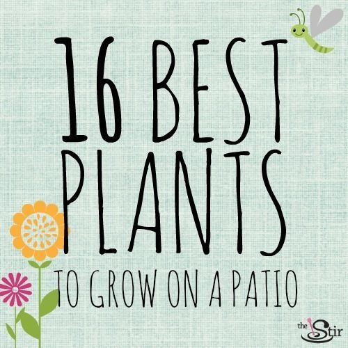 16 Plants That Are Easy To Grow On Your Patio (PHOTOS)