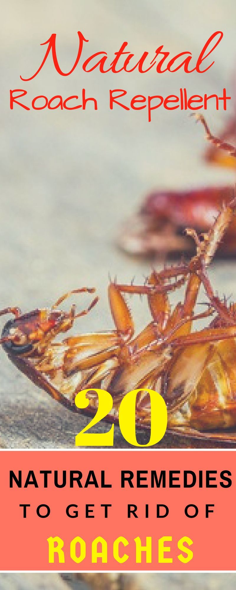 20 home remedies to get rid of roaches naturally. apply homemade