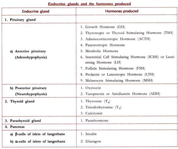 Endocrine Glands And The Hormones Produced Endocrine Hormones