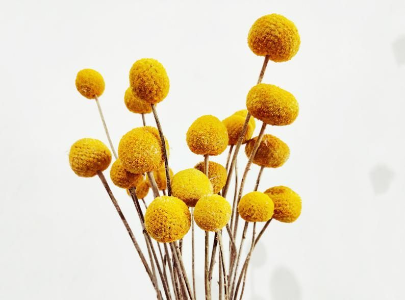 Dried Billy Balls Dry Craspedia Billy Buttons Dried Flowers Floral Arrangement Dry Flower Bouquet Craft Supp In 2020 Dried Flower Bouquet Dried Flowers Billy Balls