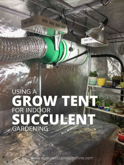 Grow Tent For Indoor Succulents What Do You Need To Know 400 x 300