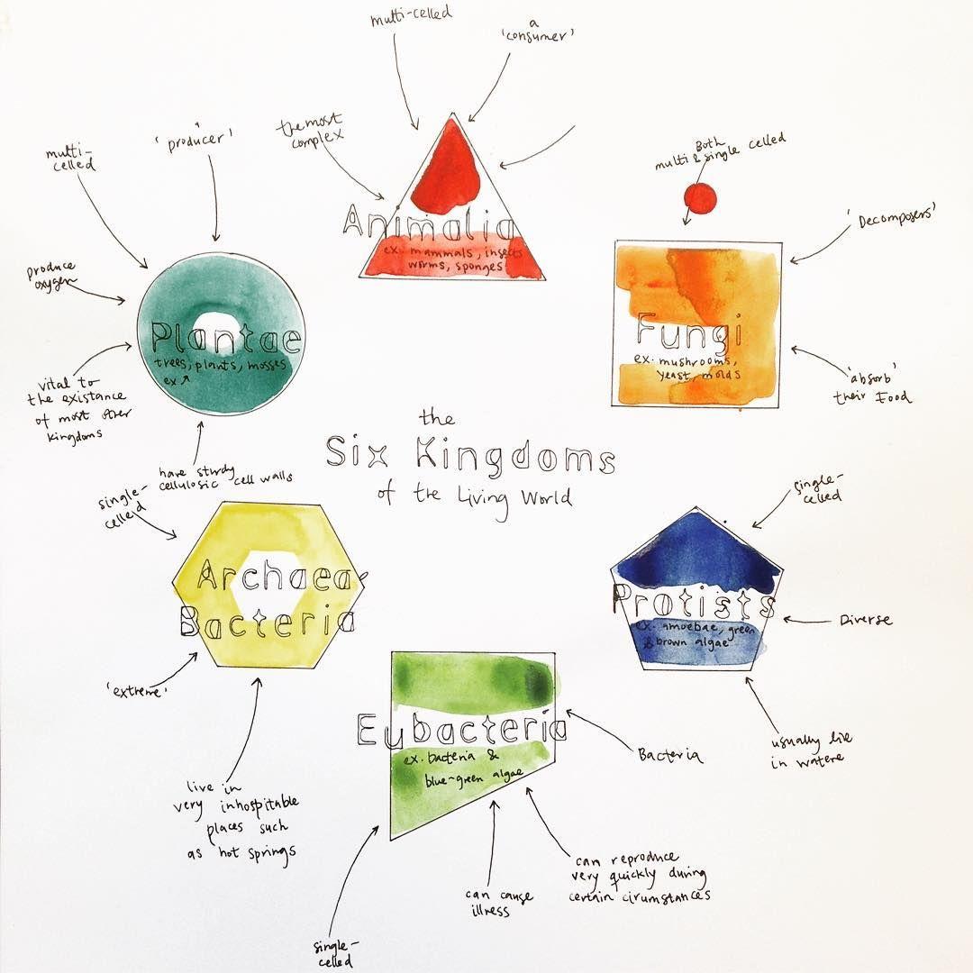The six kingdoms of the living world 😮 #illustration # ...