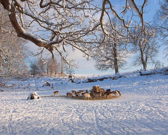Knole Park, where we used to go tobogganing as kids