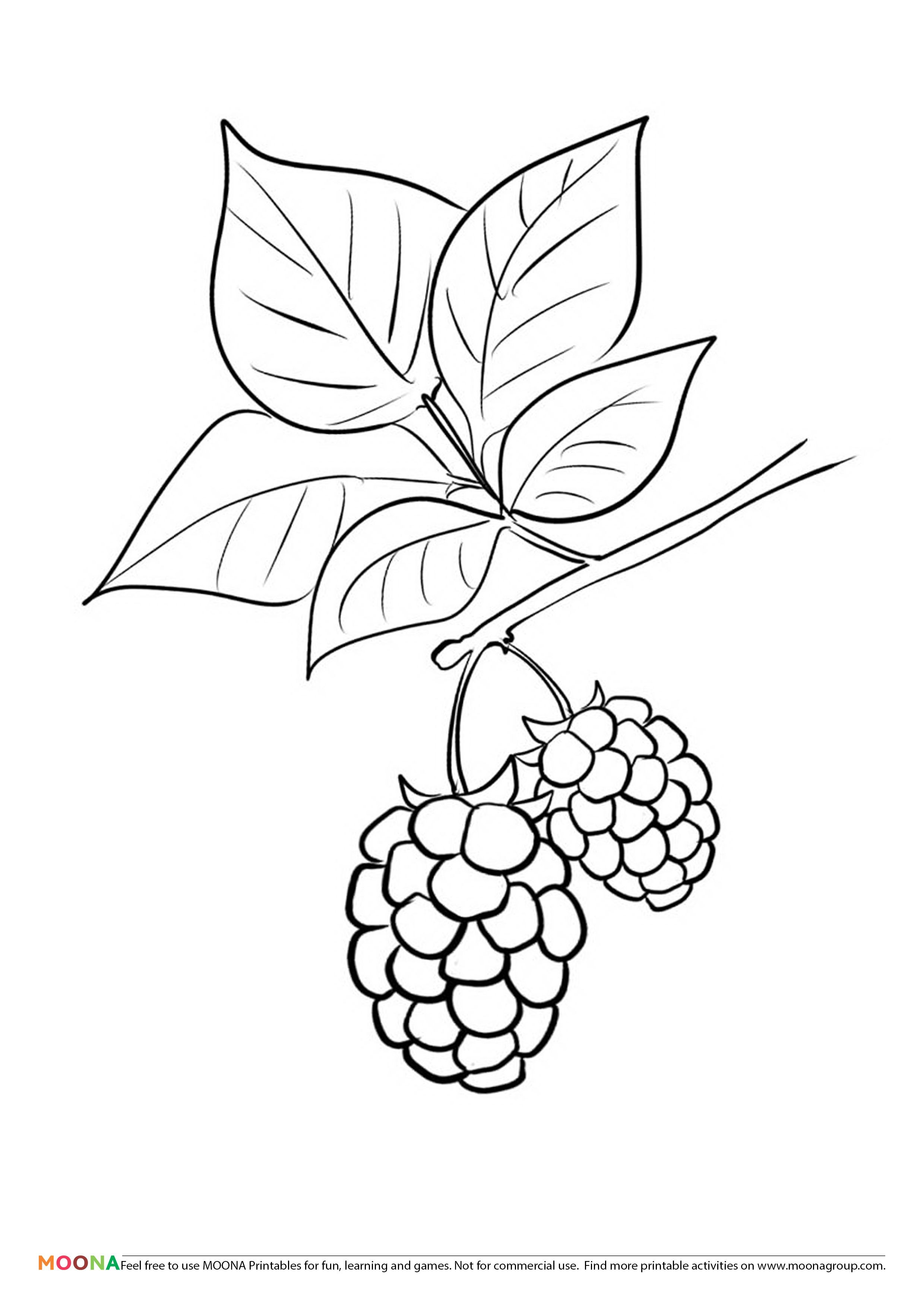Free Printable Coloring Pages For Toddlers And Preschoolers Blackberry Click Through To Custom Coloring Pages Fruit Coloring Pages Free Printable Coloring