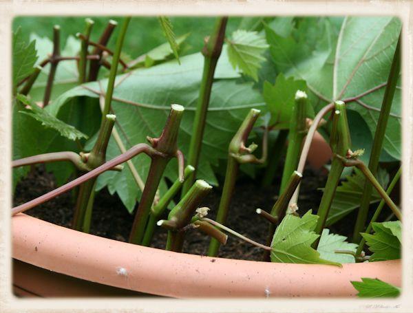 Anzuchtbox anzuchtfl che anzuchtstation anzuchtbeete for Pflanzengestaltung garten
