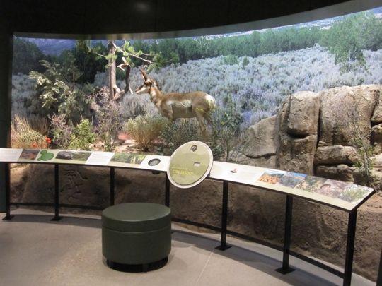 Diorama With Interpretive Panels Utah Museum Of Natural History Nature Museum Museum Displays Exhibition Display Design