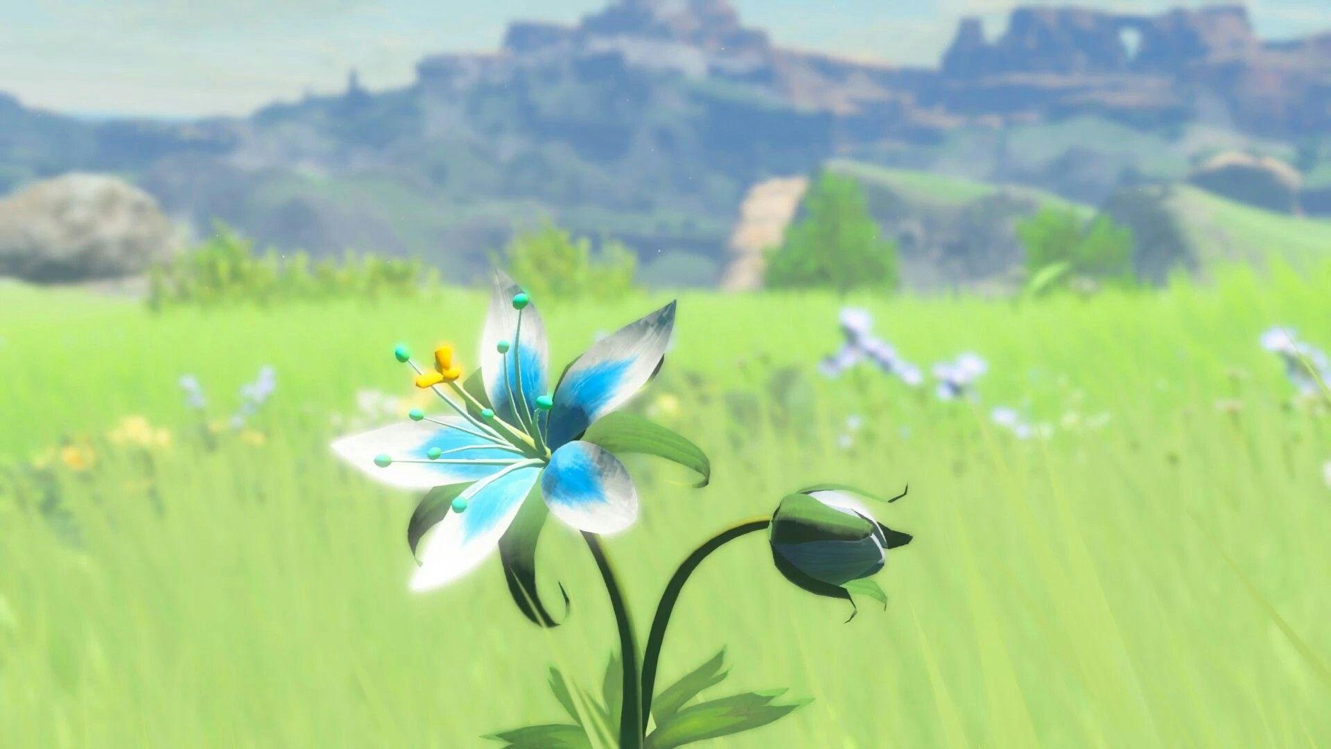 Silent princess flower from BOTW